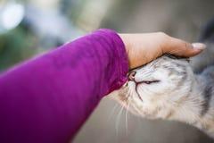 妇女Petiing猫 免版税库存图片