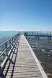 妇女Stromatolites鲨鱼湾澳大利亚 免版税库存图片