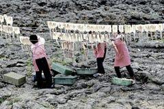 主妇烘干乌贼烤待售在济州海岛 韩国 图库摄影