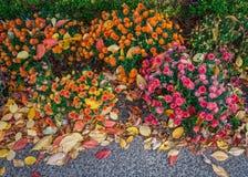 妈咪和叶子背景 免版税库存图片