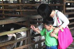 妈妈和儿子在农场 免版税库存照片