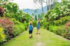 妈妈和儿子在开花的庭院里到处乱跑  愉快的家庭生活样式概念 免版税库存图片