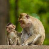 妈妈和小猴子 免版税库存图片