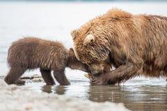 妈妈熊和她的崽 库存照片