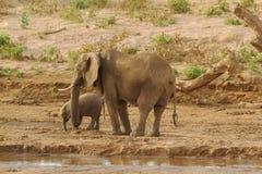 妈妈&婴孩大象 免版税库存图片