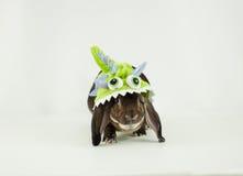 妖怪兔宝宝 库存照片