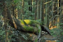妖怪在山森林里 免版税库存照片