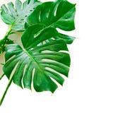 妖怪有下落的植物叶子 免版税库存图片