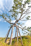妖怪结构树 库存图片