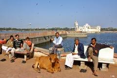 贾姆讷格尔,古杰雷特,印度- 2013年12月25日:古吉特拉人人和一头母牛画象与Lakhota湖和Lakhota堡垒在bac中 库存照片