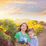姐妹孩子葡萄园收获的girs农夫在地中海autu 免版税库存照片