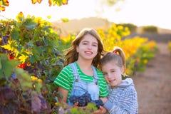 姐妹孩子葡萄园收获的girs农夫在地中海autu 免版税库存图片