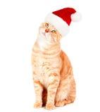 姜圣诞老人猫。 库存图片