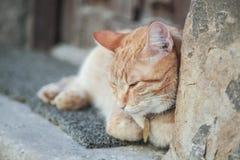 姜在一个老房子前面的睡觉猫 库存图片