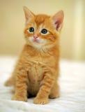 姜小猫 库存照片
