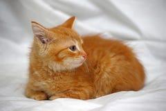 姜小猫 免版税图库摄影