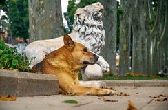 姜狗在一头狮子的雕象附近休息在Gulhane公园 是 库存照片