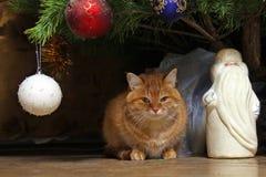 姜猫坐在新的Year& x27下; s装饰了与圣诞老人图的圣诞树  免版税库存照片