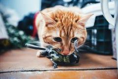 姜红色猫捉住了一只鸟 免版税库存照片