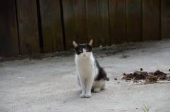 姿势猫 免版税库存照片