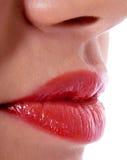 姿态红色光泽的嘴唇 库存图片