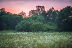 威严的自然夏天 库存照片