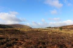 威克洛山在爱尔兰在冬天期间晒干 免版税库存图片