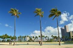 威基基美丽的景色靠岸与印象深刻的棕榈树 免版税库存图片