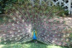 威基基,夏威夷,植物园 图库摄影