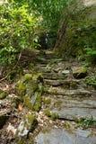 威尔士石头森林道路 免版税库存照片