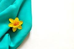 黄水仙-威尔士,英国的象征 免版税库存照片