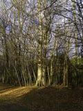 威尔逊森林 免版税库存图片
