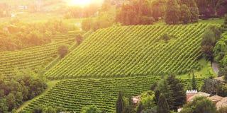 威尼托谷的葡萄园 免版税图库摄影