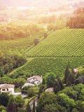 威尼托谷的葡萄园 免版税库存图片