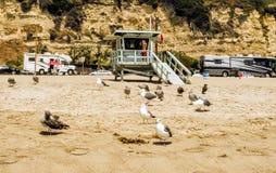 威尼斯海滩与许多海鸥的救生员塔在2017年8月13日, -威尼斯海滩,洛杉矶, LA,加利福尼亚,加州 免版税库存照片
