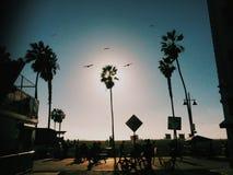 威尼斯海滩太阳海洋鸟棕榈人夏天 库存图片