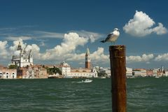 威尼斯看法有一只海鸥的在前景 免版税库存照片