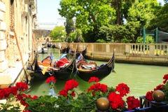 威尼斯运河红色开花意大利 免版税库存图片