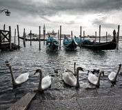 威尼斯,意大利,平底船的船夫天鹅天空 免版税库存照片