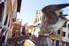 威尼斯,意大利- 2017年10月7日:在鱼市附近的海鸥在威尼斯,意大利 免版税库存照片