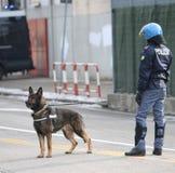 威岑扎, VI,意大利- 2017年1月28日:德国牧羊犬警察 图库摄影