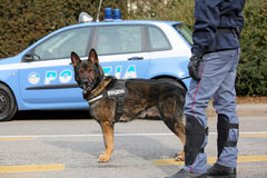 威岑扎, VI,意大利- 2017年1月28日:德国牧羊犬警察 库存照片