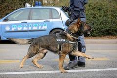 威岑扎, VI,意大利- 2017年1月28日:德国牧羊犬警察 免版税图库摄影