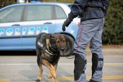 威岑扎, VI,意大利- 2017年1月28日:德国牧羊犬警察 免版税库存照片