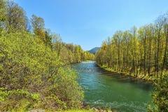 威拉米特河的中间叉子 免版税库存照片