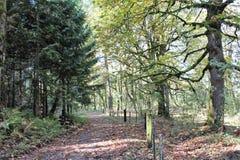 威斯敏斯特Abbey& x27; s风景森林地 图库摄影