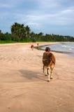 威胁步行在海海滩的一晒日光浴 库存照片