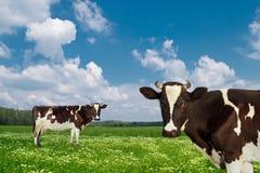 威胁牛奶店 免版税库存照片