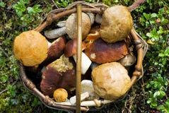 娘娘腔的男人蘑菇 库存照片