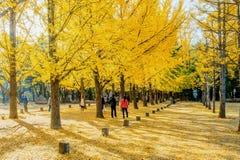 娜米海岛,韩国- 10月25 :拍照片的游人 免版税库存图片